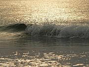 Hunting Island Posters - Sparkling Sea in Hunting Island Dawn Poster by Anna Lisa Yoder