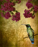 Tree Creature Prints - Sparkling Violet Ear Hummingbird Print by Susan Candelario