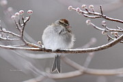Travis Truelove Photography Prints - Sparrow - Bird - Snug as a Bug Print by Travis Truelove