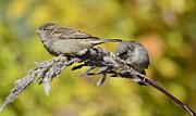Unreal Prints - Sparrow golden pampas Print by Rae Ann Garrett