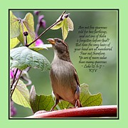 King James Framed Prints - Sparrow Inspiration from the Book of Luke Framed Print by Catherine Sherman