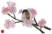 Torn Painting Framed Prints - Sparrow Likes Cherry Blossom Honey Framed Print by Keiko Suzuki