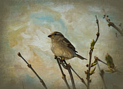 Sparrow Mixed Media - Sparrow Watching by Trudy Wilkerson