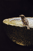 Photorealistic Prints - Sparrow with fountain Print by Alberto Ponno