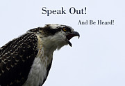 Watcher Framed Prints - Speak Out-Osprey Framed Print by Val Brackenridge