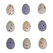 Quail Art - Speckled egg tic-tac-toe by Jane Rix