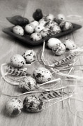 Dish Prints - Speckled Quail Eggs Print by Christopher and Amanda Elwell