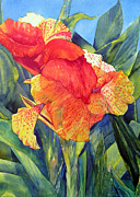 Canna Painting Framed Prints - Specled Canna Framed Print by Annika Farmer