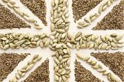 Spice Flag Print by Anne Gilbert