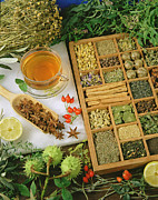 Spice Box Prints - Spices and medicinal herbs. Print by Emilio Ereza