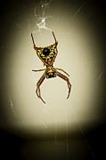 Frank Winters - Spider