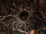 Mike Cartwright - Spider in Spiderweb
