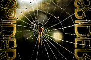Arachnid Framed Prints - Spider in the web Framed Print by Tommy Hammarsten