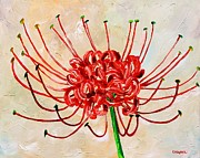 Mississippi Flowers Prints - Spider Lily Print by Karl Wagner