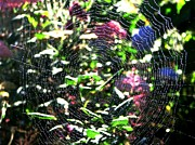 Spider Web Abstract Print by Judyann Matthews