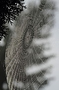 Dew Covered Posters - Spider Web Poster by Angie Vogel