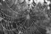 Dan Friend - Spider web in rain