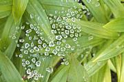 James BO  Insogna - Spider Web Of Diamonds