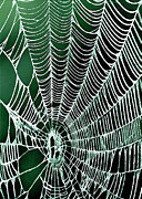 Nadine and Bob Johnston - Spider Web Rancho Oso...