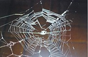 My Back Yard Prints - Spider web Print by Robert Floyd