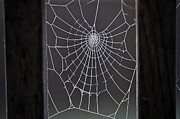 Close Focus Nature Scene Prints - Spider web with frost Print by Jim Corwin