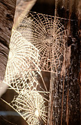 Sticky Posters - Spider Webs Poster by Anonymous