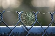 Rderder Prints - Spider work Print by Roy Erickson