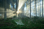 Styria Photos - Spiders web by Daniel Gerd Poelsler