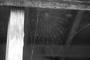 Liz Bills - Spiders Web