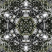 Trina Stephenson - Spiderweb in Black