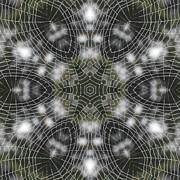 Trina Stephenson - Spiderweb in Black