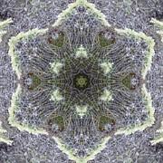 Trina Stephenson - Spiderweb Pattern