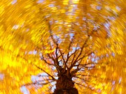 Bernhart Hochleitner Metal Prints - Spinning Maple Metal Print by Bernhart Hochleitner