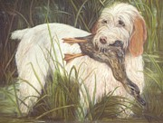 Working Dogs Pastels Framed Prints - Spinone Italiano First Duck  Framed Print by Barb Yates