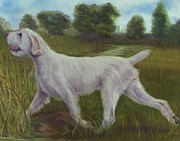 Hunting Pastels Framed Prints - Spinone Italiano on Retreive Framed Print by Barb Yates