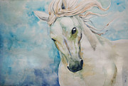Stallion Drawings - Spirit by Cindy Elsharouni