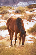 Wild Horse Metal Prints - Spirit Horse Metal Print by Peter Coskun