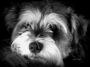 Animal Shelter Digital Art - Spirit Missing Lisa -bw by Angela Hodges Clay