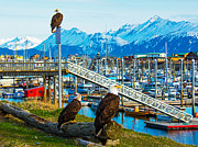Bald Eagles Posters - Spirit Of Homer Spit Boat Harbor Poster by Debra  Miller