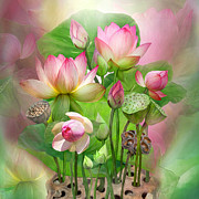 Pink Lotus Framed Prints - Spirit Of The Lotus - SQ Framed Print by Carol Cavalaris