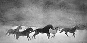 In The Studio Prints - Spirited Horse Herd Print by Renee Forth Fukumoto