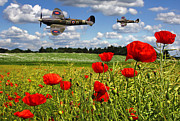 Bomber Escort Photo Posters - Spitfires and Poppy field Poster by Ken Brannen