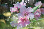 Flower Photographs Pastels Prints - Splash of Color Print by Beverly Guilliams