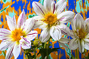Dahlias Prints - Splash of color Print by Garry Gay
