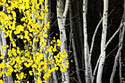 The Forests Edge Photography - Diane Sandoval - Splash of Gold