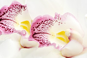 Beauty Mark Art - Splash of Pink by Mark Johnson