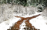 Snowy Roads Art - Split Decision by Marilyn Hunt