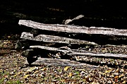 Split Rail Fence Photos - Split Rail Fence by JW Hanley