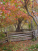 Split Rail Fence Posters - Split Rail Fence Poster by Mike and Sharon Mathews
