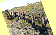 Beach Fence Digital Art Posters - Split Rail Fence Yellow Poster by Barbara Snyder